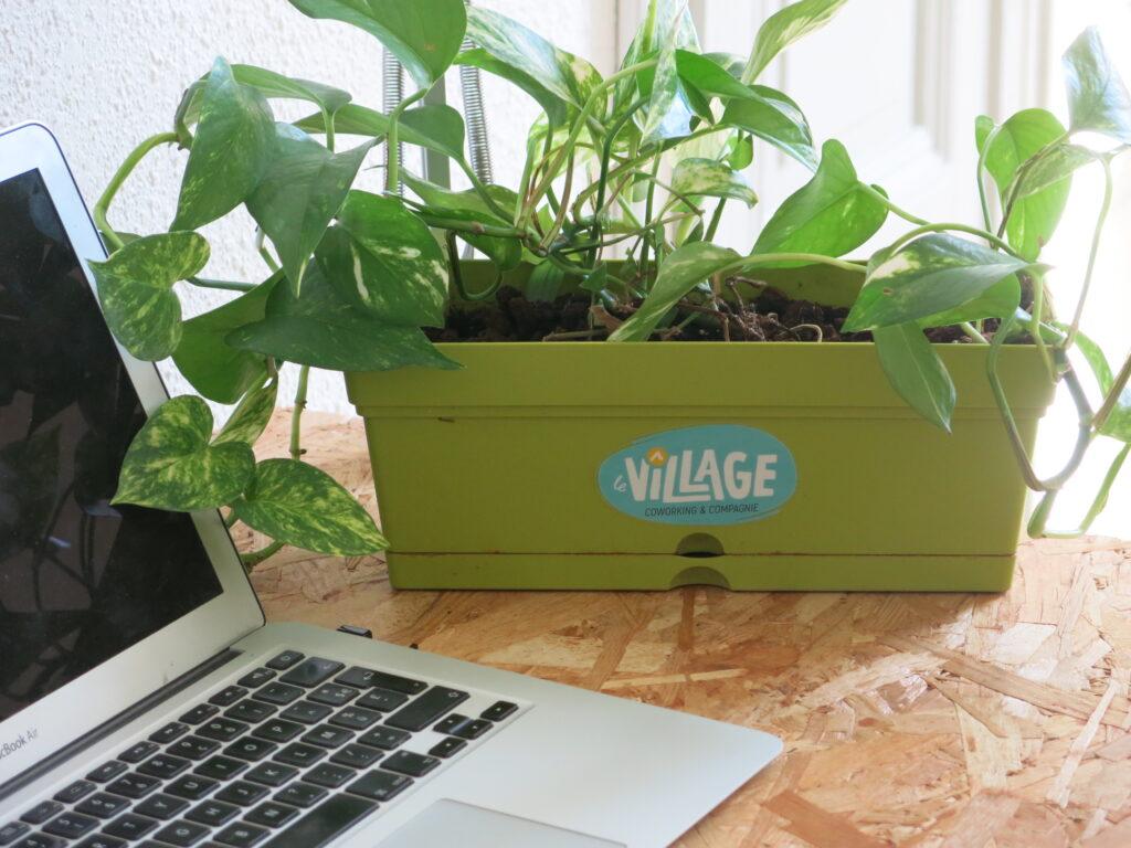 plante verte-2